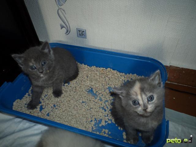 Отдам в дар: отдам котенка в добрые руки (2 мес) фото3