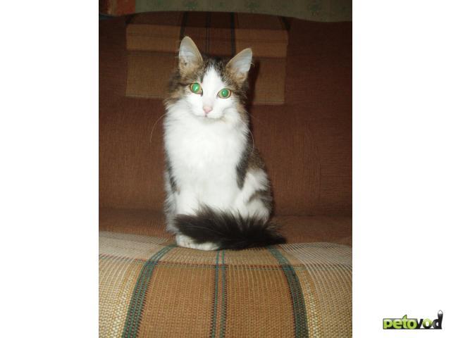 Отдам в дар: Кошечке нужен любящий хозяин фото2