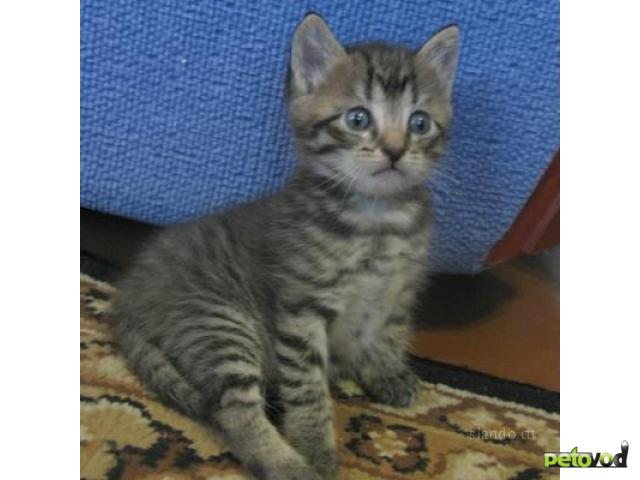 Отдам в дар: Отдам котенка в хорошие руки