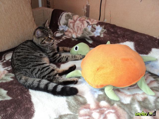 Отдам в дар: Совсем еще котенок