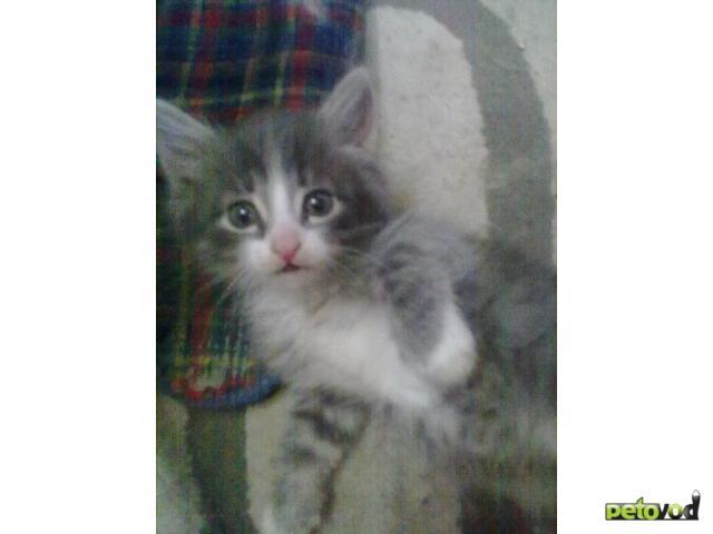 Отдам в дар: котята в добрые руки