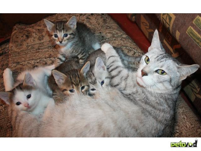 Отдам в дар: Трое котят ждут хозяев