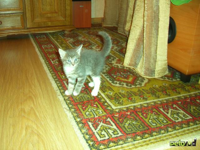 Отдам в дар: Три котенка-близнеца ищут доброго хозяина фото3
