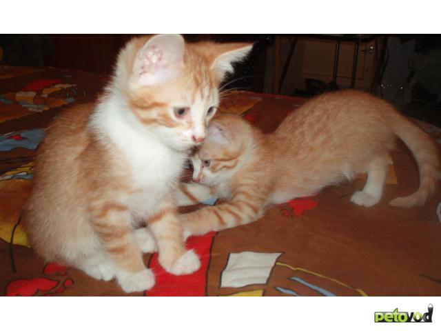 Отдам в дар: Отдам только в добрые руки котёнка