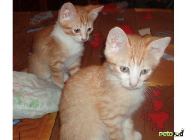 Отдам в дар: Отдам только в добрые руки котёнка фото2