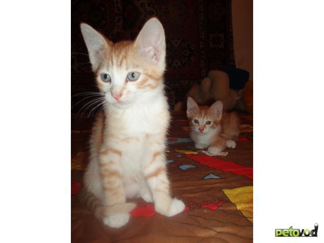 Отдам в дар: Отдам только в добрые руки котёнка фото3
