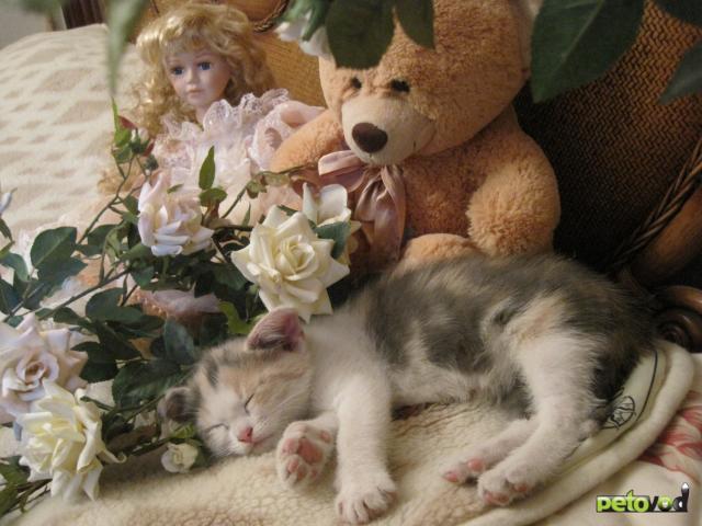 Отдам в дар: Очаровательная девочка ищет теплый дом фото2