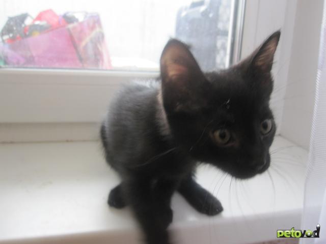 Отдам в дар: Котенок в добрые руки