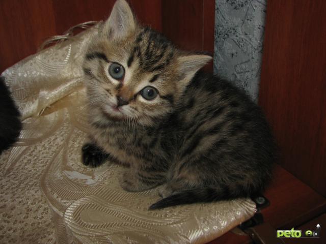 Отдам в дар: Отдам прекрасных котят