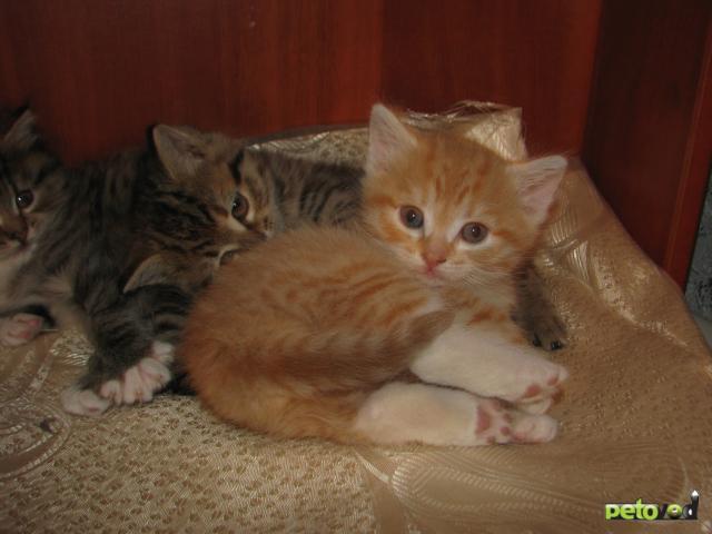 Отдам в дар: Отдам прекрасных котят фото2