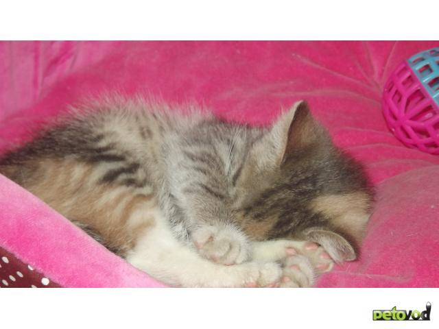 Отдам в дар: Отдам котенка в хорошие руки фото3