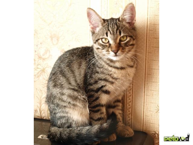 Отдам в дар: Отдам котят в хорошие руки фото3