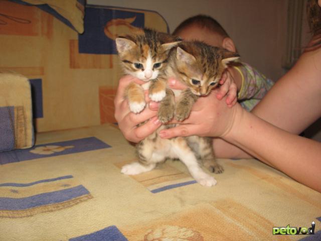 Отдам в дар: Отдадим в добрые руки милых котят