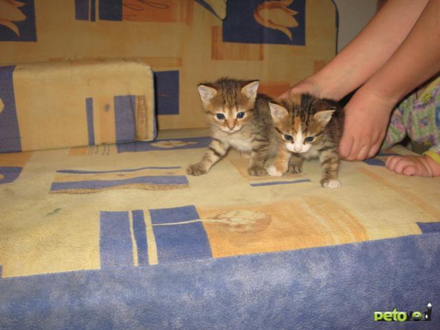 Отдам в дар: Отдадим в добрые руки милых котят фото3