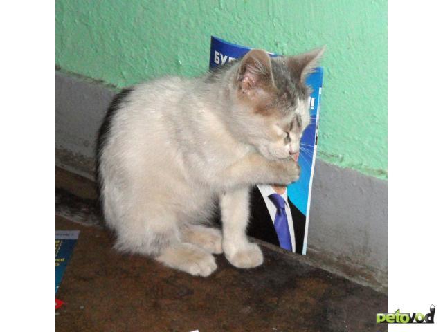 Отдам в дар: Замечательный белый котенок ищет хозяина фото3