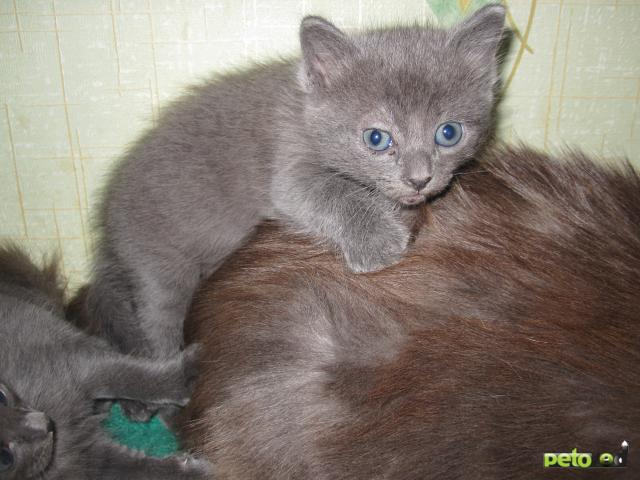 Отдам в дар: Ищу доброго и заботливого хозяина для котят