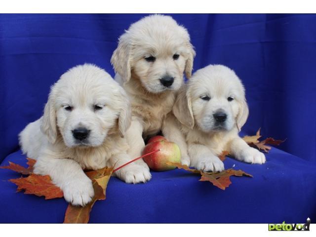 Продаю: Элитные щенки Подростки и малыши