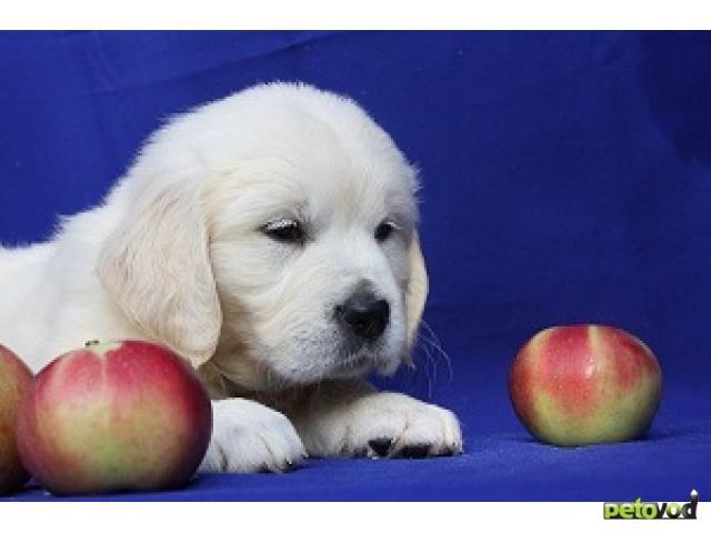 Продаю: Элитные щенки Подростки и малыши фото2