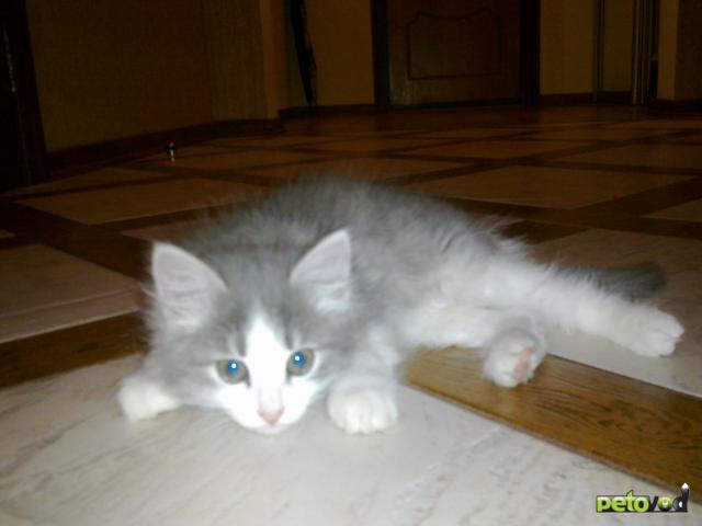 Отдам в дар: Маленькие котики ищут дом