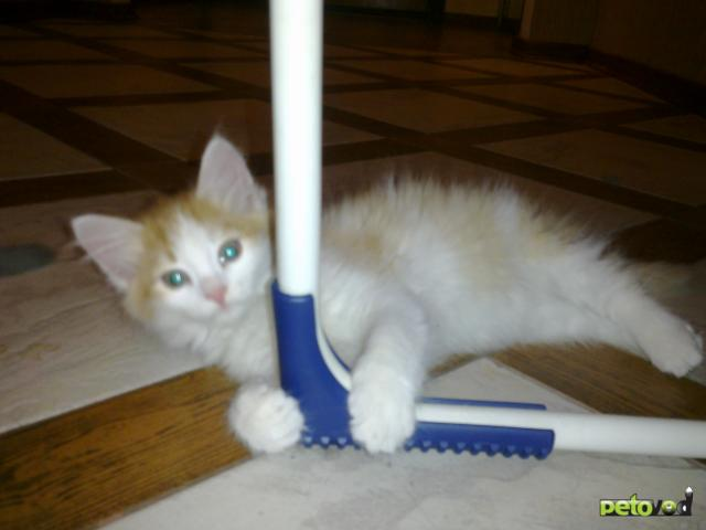 Отдам в дар: Маленькие котики ищут дом фото3
