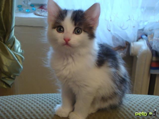 Отдам в дар: Красивые котята в дар фото2