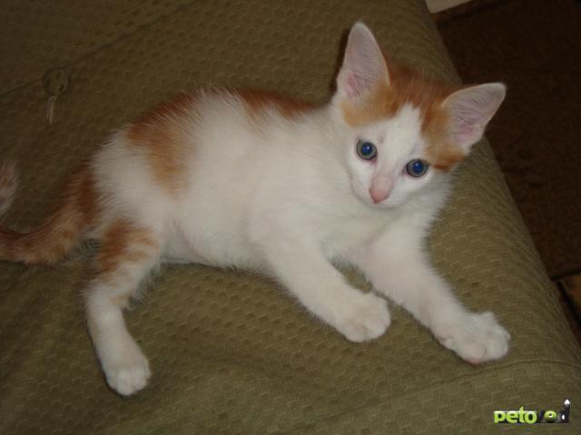 Отдам в дар: Красивые котята в дар