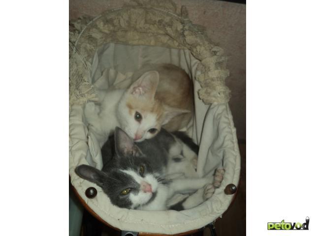 Отдам в дар: Отдам в дар двух котят