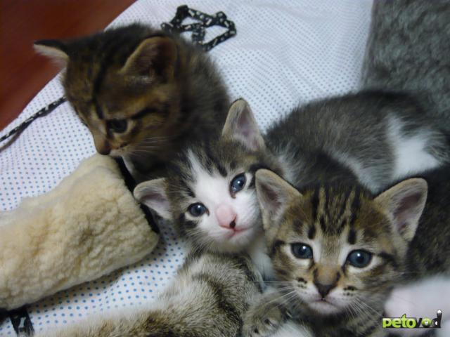 Продаю: продам котят фото3