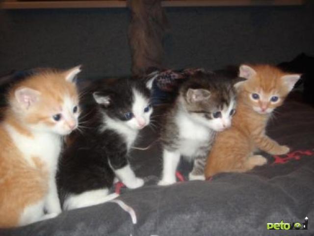 Отдам в дар: Очаровательные пушистые котята