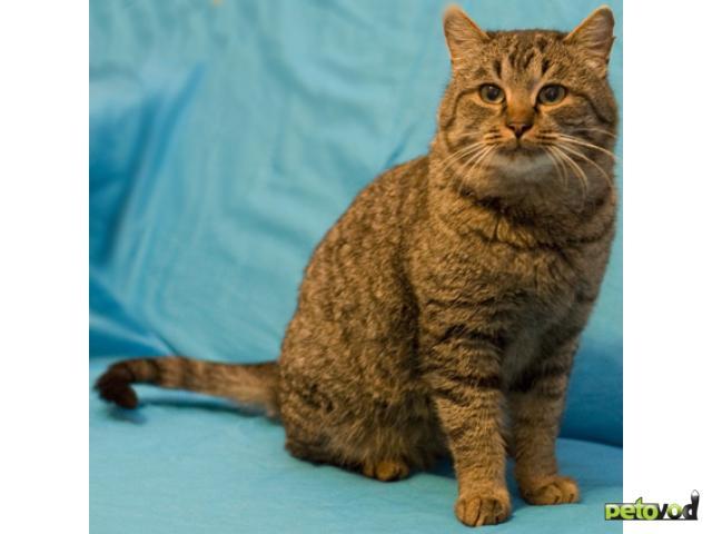 Отдам в дар: Котик с бархатной шерсткой в добрые руки
