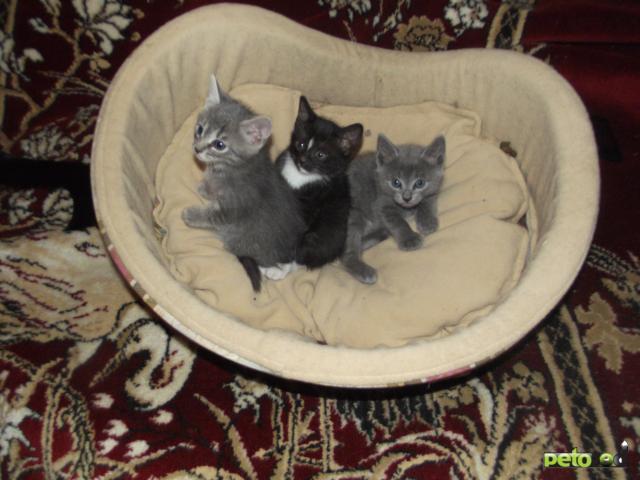 Отдам в дар: Отдам трех хороших котят