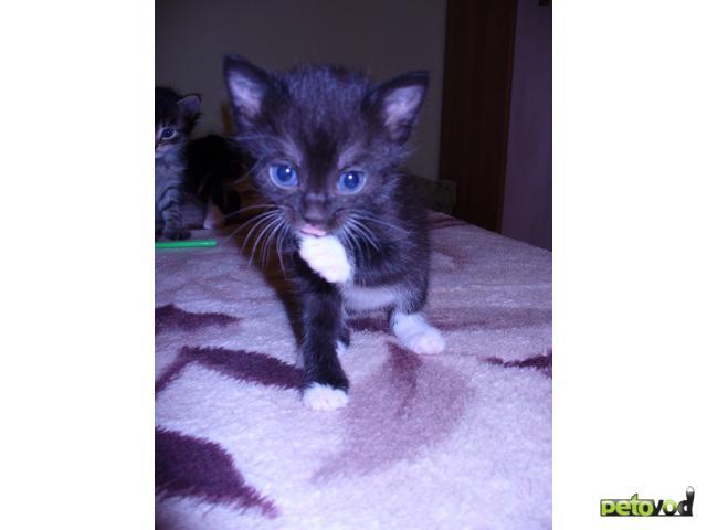 Отдам в дар: очаровательные котята ищут хозяина