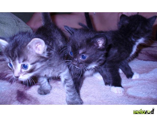 Отдам в дар: очаровательные котята ищут хозяина фото2
