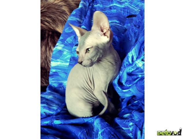 Продаю: котята ищут нового доброго хозяина
