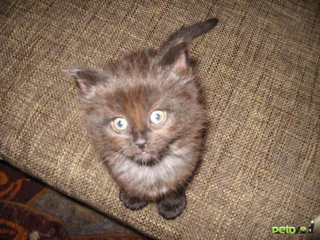 Отдам в дар: отдам в добрые руки котяток фото2