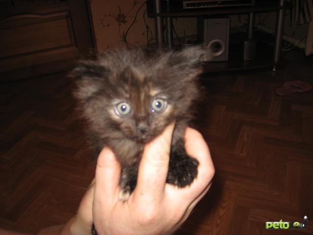 Отдам в дар: отдам в добрые руки котяток