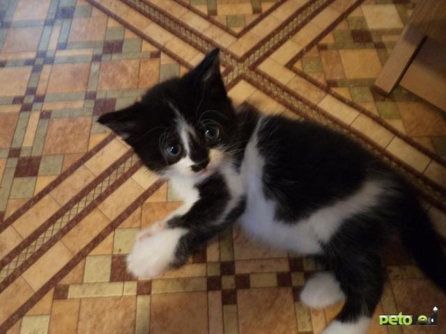 Отдам в дар: Отдадим в добрые руки котенка