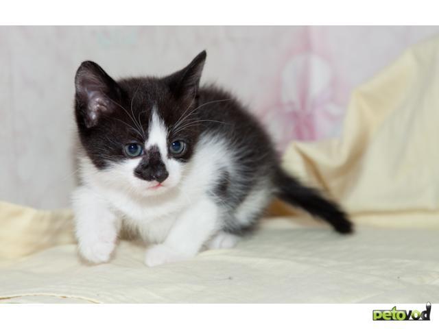 Отдам в дар: Котенок в хорошие руки