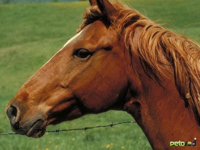 Аллергия на лошадь