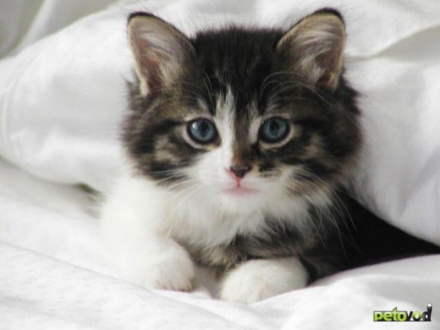 Последствия неправильного питания кошки