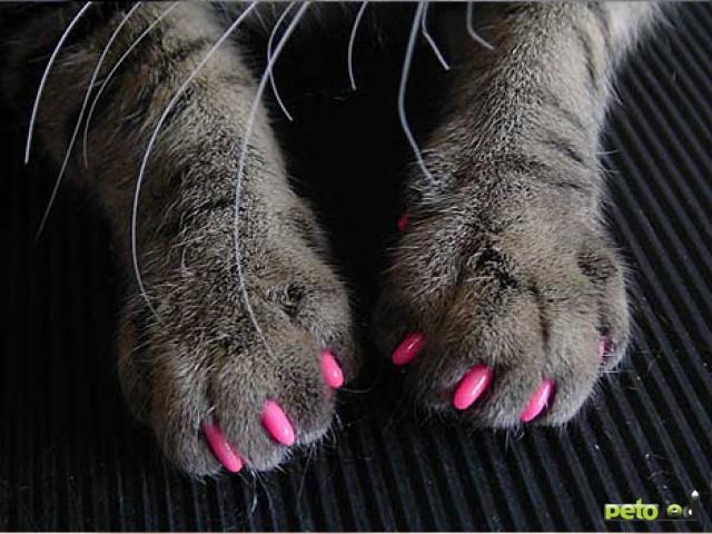 Почему необходимо заботиться о когтях кошек