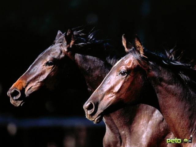 Стресс у лошади