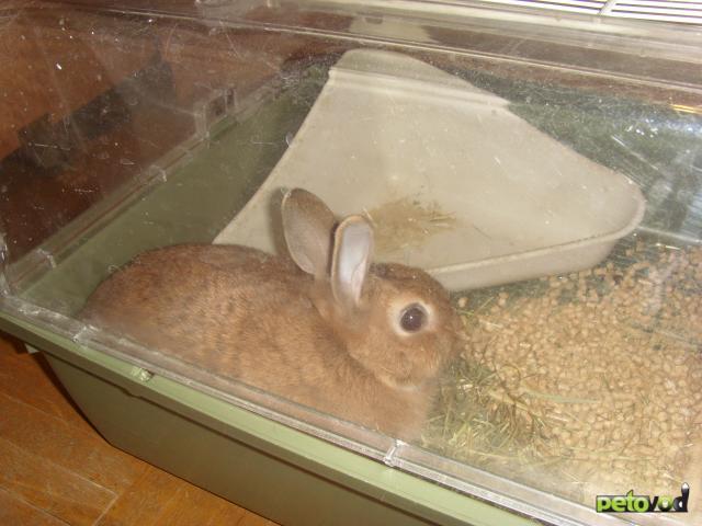 Продаю: Отдам карликовую кроличку за символическую цену