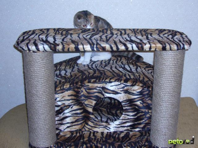 Продаю: Домики для кошек