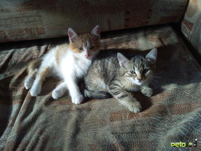 Отдам в дар: Отдам в добрые руки котят