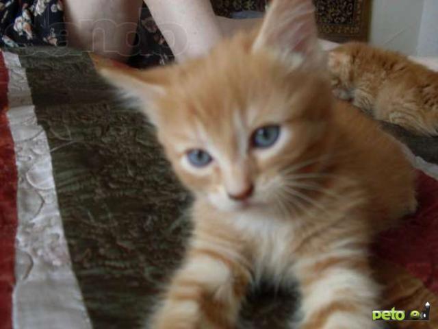 Отдам в дар: Маленький котенок ищет дом