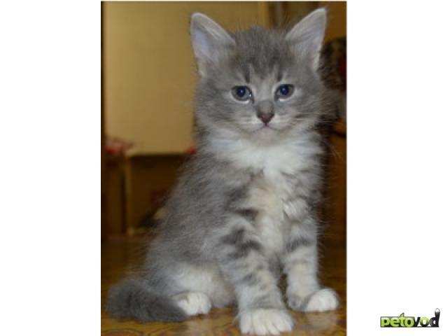 Отдам в дар: Очаровательные котята ждут своих добрых хозяев