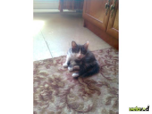 Отдам в дар: Отдам красивого и доброго котенка в добрые руки