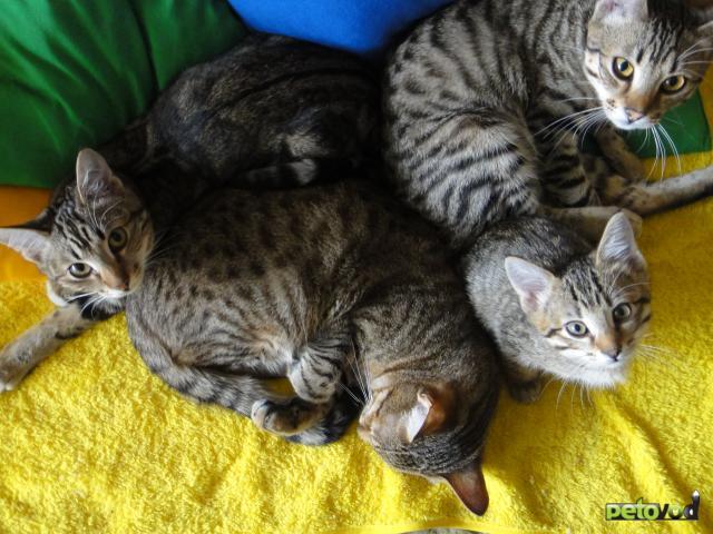 Отдам в дар: Отдам в добрые руки взрослых кошек