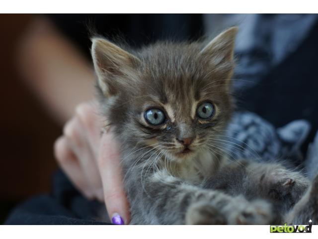 Отдам в дар: Отдам в хорошие руки котенка